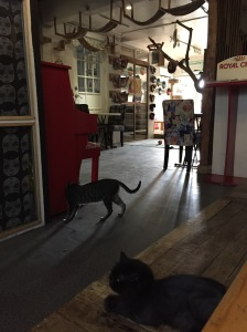 Miao Cat Cafe interior 2