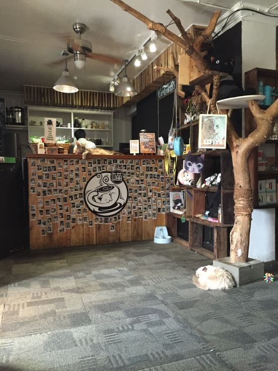 Miao Cat Cafe interior